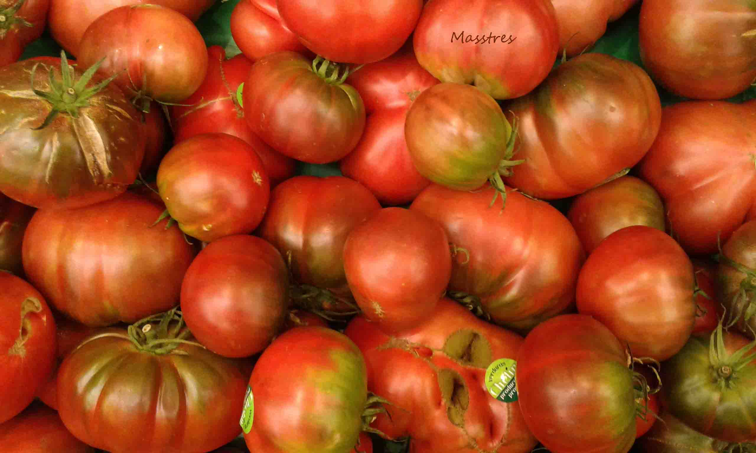 Tomate Negro de Santiago 9Mss