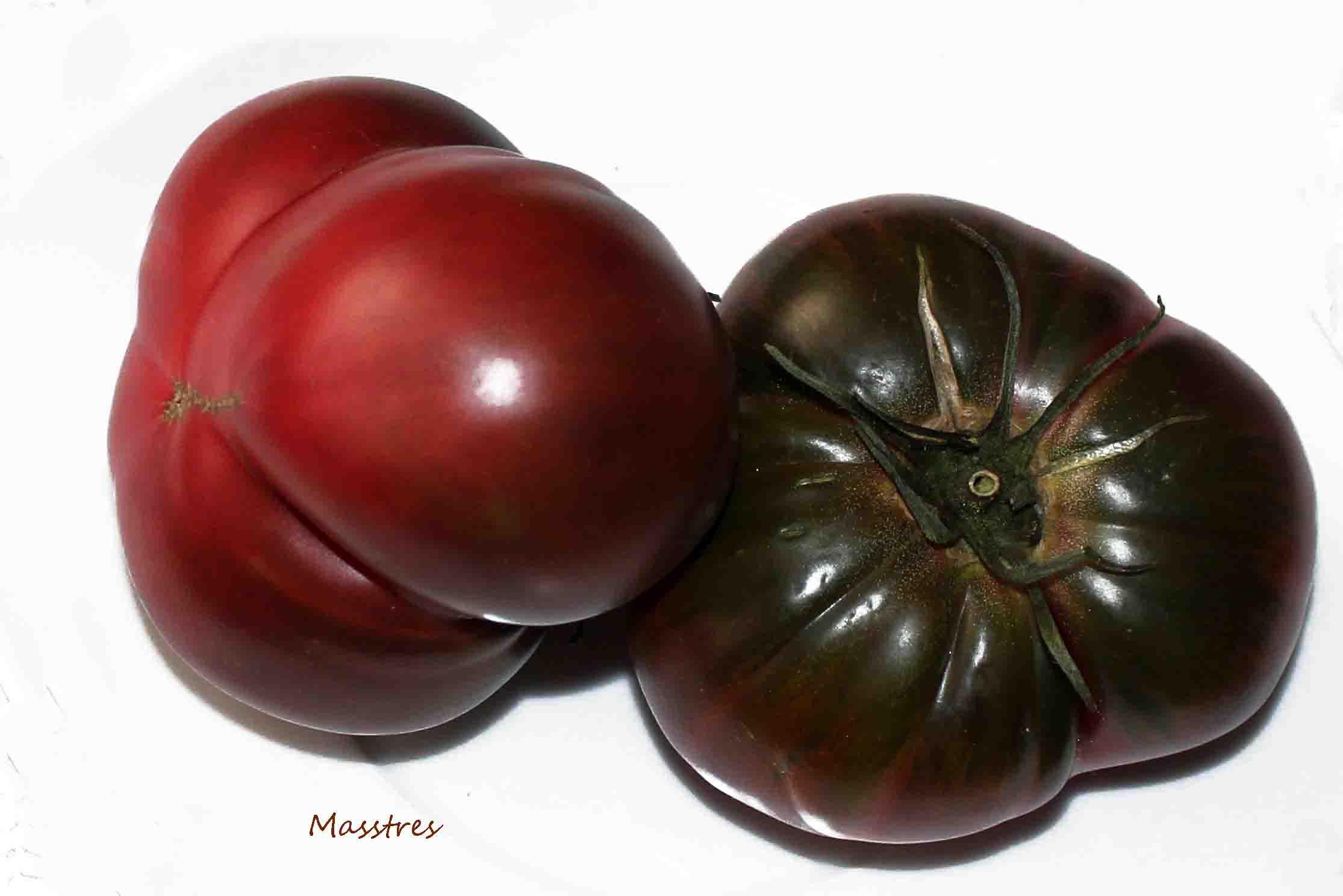 Tomate negro de Santiago5Mss